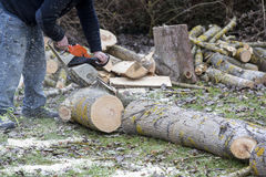 Man with chainsaw cutting the tree Stock Photography