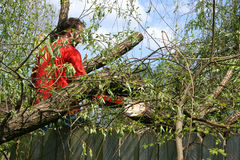 Man With Chainsaw In Fallen Willow Tree Stock Image