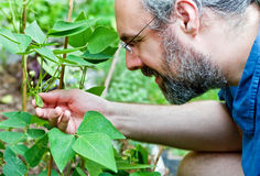 Man checks garden plant with a smile Stock Photography