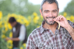 Man chewing on corn. In a field Stock Photography
