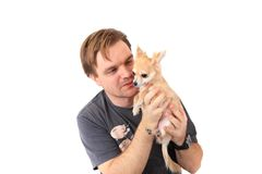 Man and chihuahua pet Royalty Free Stock Image
