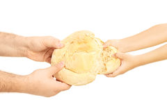 Man and child breaking apart a bread loaf. Isolated on white background royalty free stock images