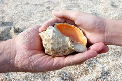 Man and child keeps seashell Royalty Free Stock Photos