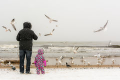 Man and child on winter beach. Man and child feeding seagulls at Baltic beach on stormy winter`s day. 01.06.2017, Gdansk, Poland Royalty Free Stock Images