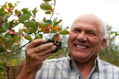 Man with chokeberry stock image