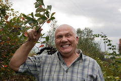 Man in chokeberry plant Royalty Free Stock Photo