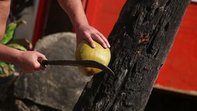 Man chopping a fresh coconut for drink juice. Sequence 2 shot stock footage