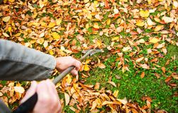 Man cleaning fallen autumn leaves in the yard Stock Images