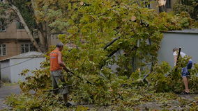 Man cleaning fallen tree after big storm on the road in July. Old man with the young boy assort branches og the fallen tree after hard rainy storm stock video footage