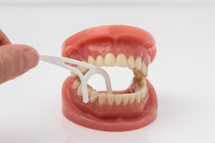 Man cleaning false teeth with dental floss. Man cleaning a pair of false teeth with dental floss demonstrating how to clean between the teeth over a with Stock Photos