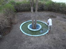 A man cleaning a fish pond in the tropics. Scooping duckweed from a pool during the dry season on bequia stock video