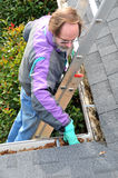 Man cleaning gutters. On ladder Stock Images