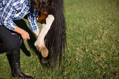 Man cleaning horse hoof. In the ranch Stock Image