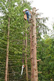 Man climbing down from topped tree. Worker man climbing down from a tall cedar tree with chainsaw and other tools stock photo