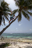 Man climbing palm tree Stock Photo