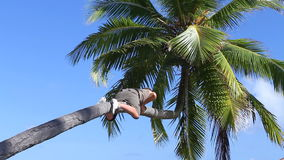 Man is climbing on a palm stock video footage