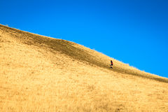 A man climbing a steep tall hill on a clear summer day. Royalty Free Stock Image