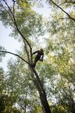 Man climbs up on a tree using ropes.The man is wearing safety equipment clothes royalty free stock photo