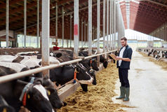 Man with clipboard and cows at dairy farm cowshed. Agriculture industry, farming, people and animal husbandry concept - young man or farmer with clipboard and royalty free stock photography