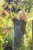 Man clipping branch at plant nursery Stock Photos