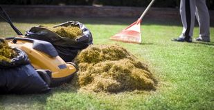 A man clogs the felt with a lawn with red plastic rags, after aeration.  royalty free stock images