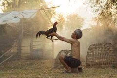 The man with cock fighting Royalty Free Stock Images