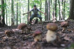 Man collect mushrooms. In summer forest royalty free stock images