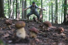 Man collect mushrooms royalty free stock image