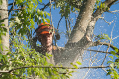 Man concentrating on sawing a tree Stock Photography