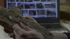 Man is considering a fossil stock video footage