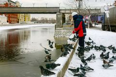 Man in construction helmet feeds with bread crumbs ducks and pigeons. stock photography