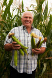 Man with corn ears Royalty Free Stock Photo