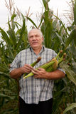 Man in corn field Royalty Free Stock Image