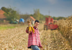 Man in corn field Royalty Free Stock Photos