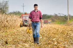 Man in corn field Royalty Free Stock Photos