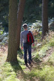Man On Country Walk Through Woodland Royalty Free Stock Photo
