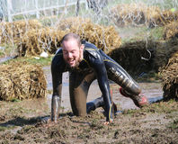 Man covered with mud crawling between sheaf of hay. STOCKHOLM - MAY 09, 2015: Man covered with during the last station of the public obstacle race event Tough Royalty Free Stock Image