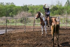 Man in a cowboy outfit with his horse royalty free stock photography