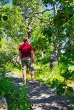 A man in the Crooked Bush of Saskatchewan. The Crooked Bush is a grove of aspen trees that grow in all directions, except straight up. Here is a trail leading royalty free stock photography