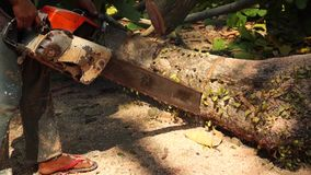 Man cross cut huge tree trunk with chainsaw. Close up stock video