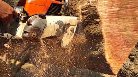 Man cross cut huge tree trunk with chainsaw. Close up stock footage