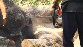 Man cross cut huge tree trunk with chainsaw stock footage