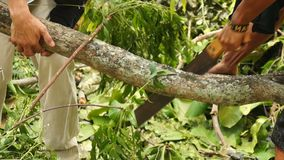 Man cross cut tree branch with Japanese saw. Close up stock footage