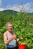Man with cucumbers 10 Stock Photo