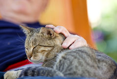 Man cuddling cat. Tabby cat enjoying cuddling in old man's lap stock images