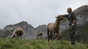 A man cuddling a colt in a mountain scenery. Royalty Free Stock Photography