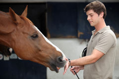 Man cuddling a horse. Young man cuddling a horse Royalty Free Stock Images