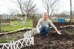 Man cultivates raspberry seedlings. The man cultivates raspberry seedlings in spring Stock Image