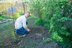 Man cultivates seedlings. The garden Royalty Free Stock Photography