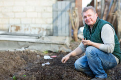 Man cultivates the seeds of radish. In the garden Stock Images